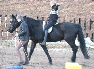 Erlangen der Bewußtheit der Körperbewegungen des Pferdes