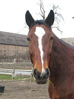 Pferd Rico